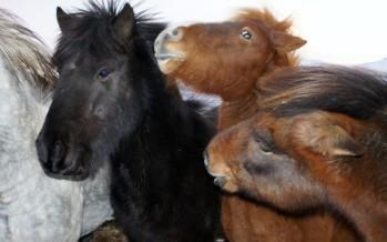 Forsendubrestur í uppbyggingu hesthúsahverfis við Símonartún, Eskifirði