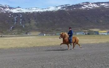 Einar og Masi