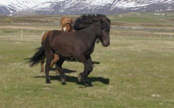 Hestar og hestamenn á Fáskrúðsfirði