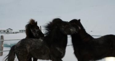 Hestamenn og áhugafólk um hestamennsku  í Fáskrúðsfirði skora á Fjarðabyggð