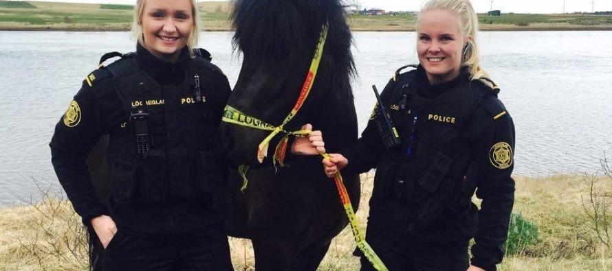 Dagbók lögreglunnar á Suðurlandi – Hestur tekinn fyrir ólöglega grasneyslu