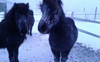 Fjarðabyggð – Fundur með hestamönnum um beitarmál