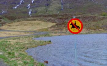 Fjarðabyggð og hestamenn á Fáskrúðsfirði