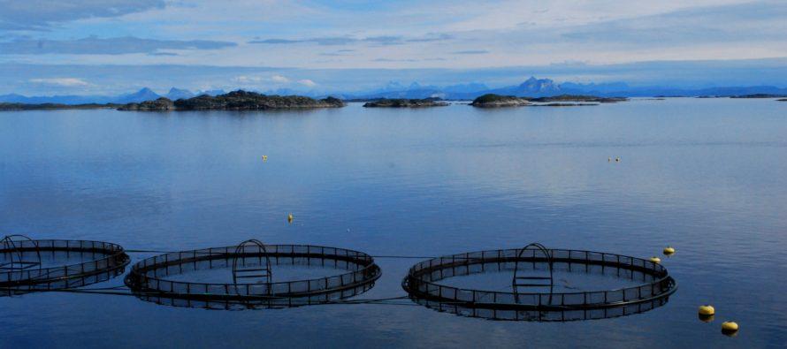 Umsagnir vegnar Fiskeldi Austfjarða á allt að 20.800 tonn í Beru- og Fáskrúðsfirði