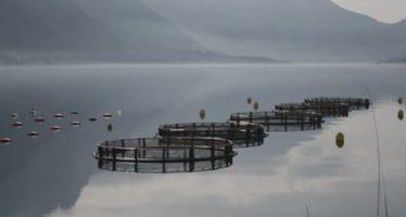 Sjókvíaeldi – Hættulegt fyrir umhverfið og lífríkið