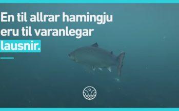 Látum náttúruna njóta vafans – Framtíðin felst í lokuðum sjókvíum og landeldi.